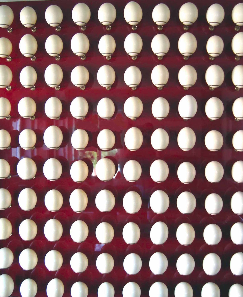 Egg installation 1 a 220cm per 240cm ostrich eggs brass wood